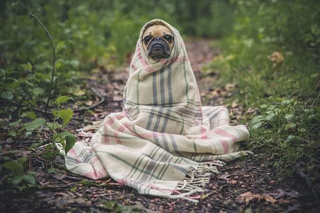 寒がりは何枚着ても寒い。低体温の原因と、冬でも暖かく過ごせる体質に改善する方法