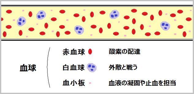 白血球と免疫の仕組みについて分かりやすく説明してみた