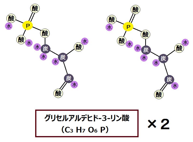 2つのグリセルアルデヒド-3-リン酸
