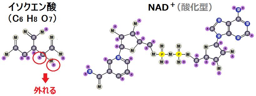 イソクエン酸とNAD+