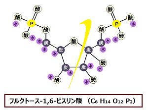 フルクトース-1、6-ビスリン酸のアルドラーゼによる開裂