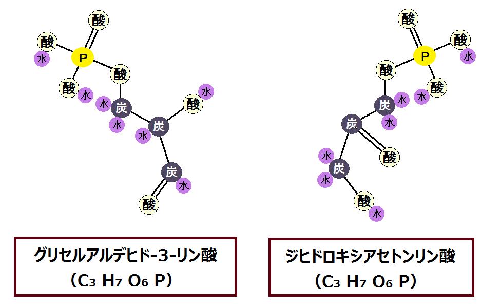 グリセルアルデヒド-3-リン酸とジヒドロキシアセトンリン酸