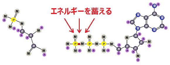 3-ホスホグリセリン酸とATP