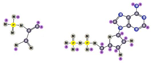 ホスホエノールピルビン酸とADP