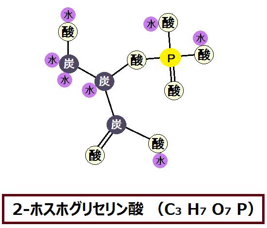 2-ホスホグリセリン酸