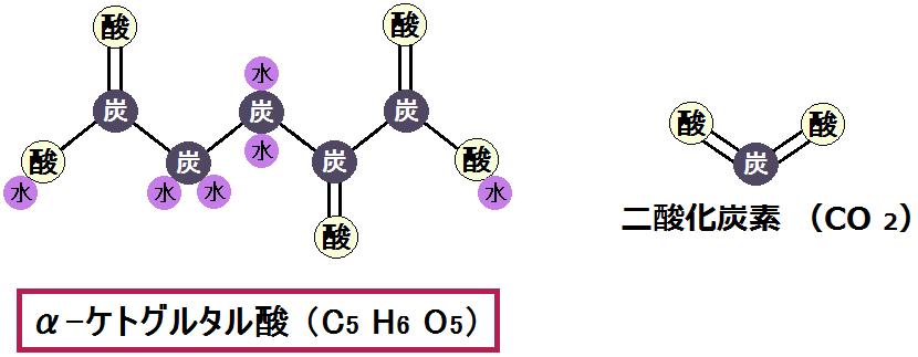 α-ケトグルタル酸と二酸化炭素