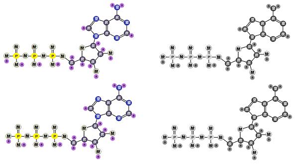 解糖系でATPは2分子生産される