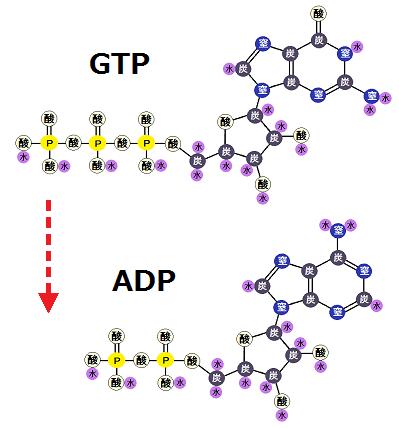 GTPのリン酸をADPに