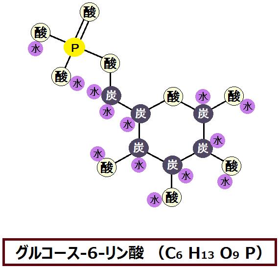 グルコース-6-リン酸