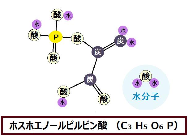 ホスホエノールピルビン酸と水分子
