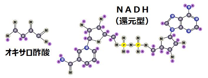 オキサロ酢酸と還元型のNADH