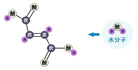 フマル酸と水分子