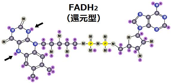 FADH2