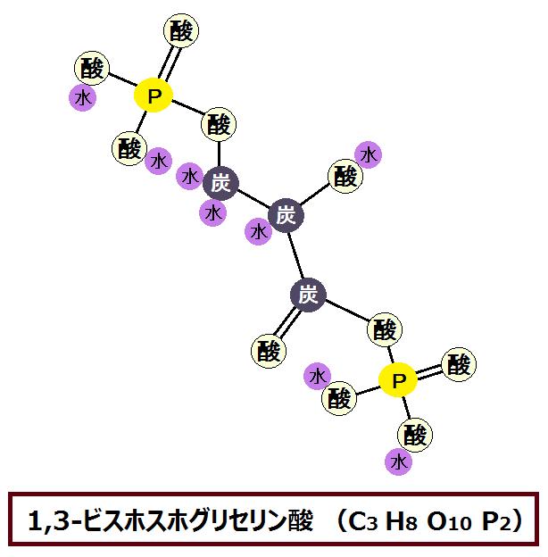 1,3-ビスホスホグリセリン酸