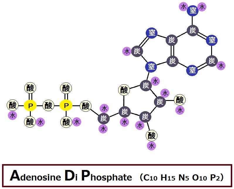 ADP(アデノシン二リン酸)