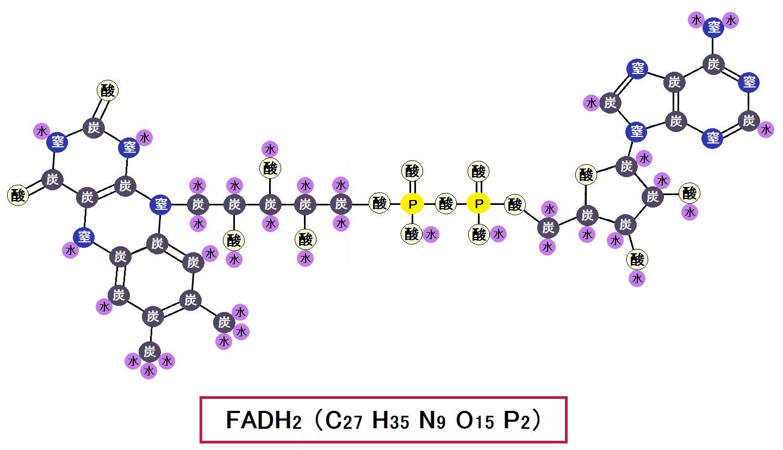 還元型FADH2