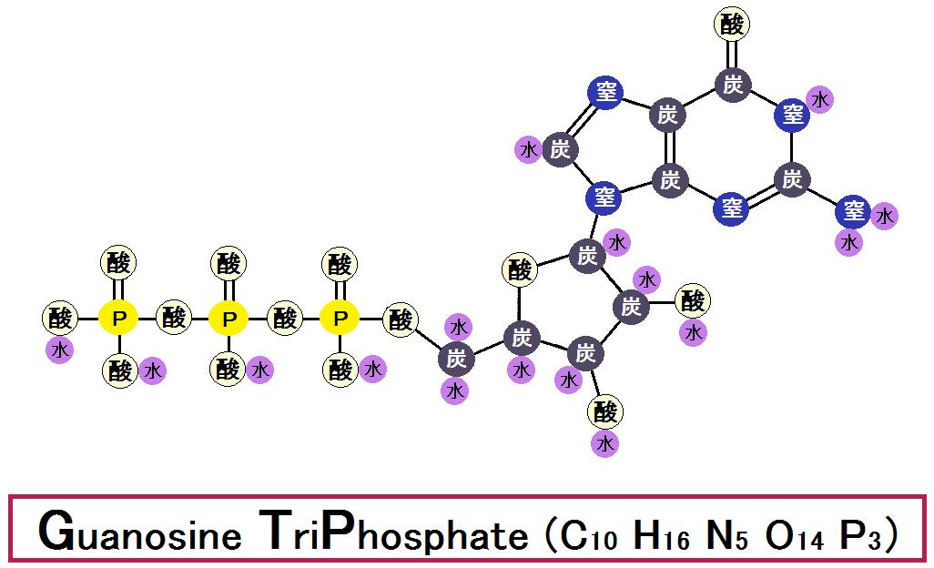GTP(グアノシン三リン酸)