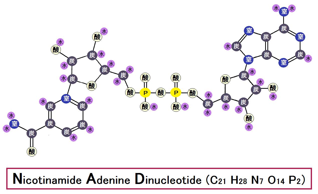 酸化型NAD