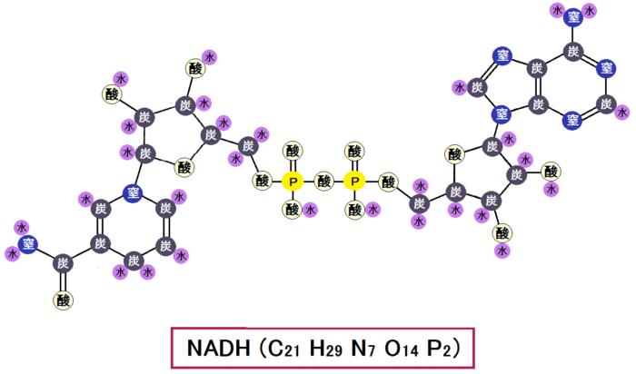 NADH(還元型)