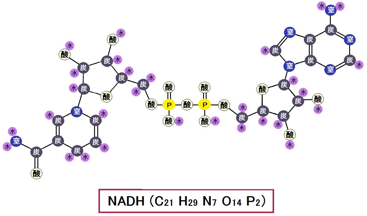 還元型NADH
