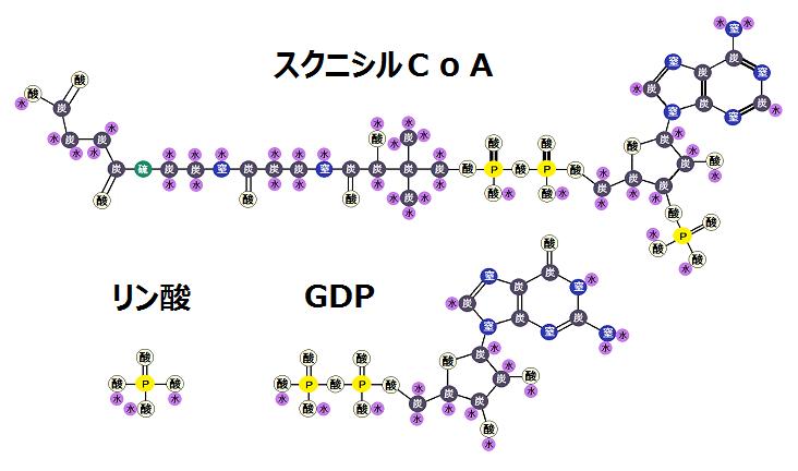 スクニシルCoAとGDPとリン酸