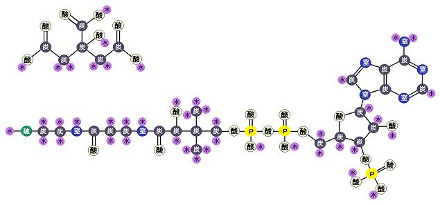 クエン酸とCoA