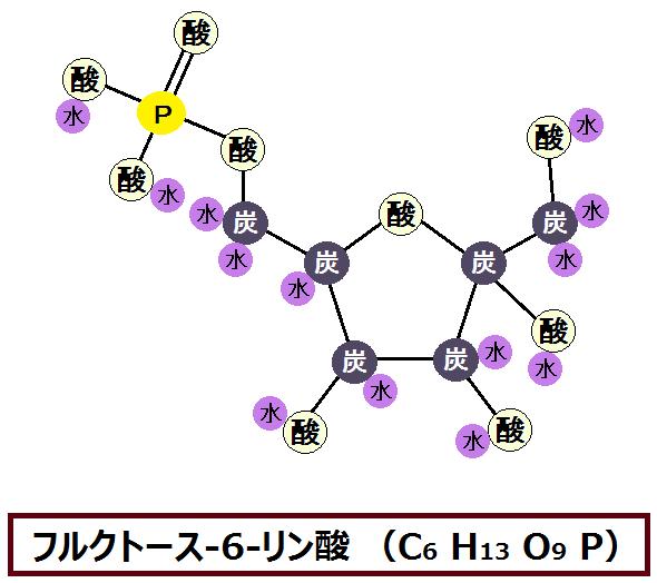 フルクトース-6-リン酸
