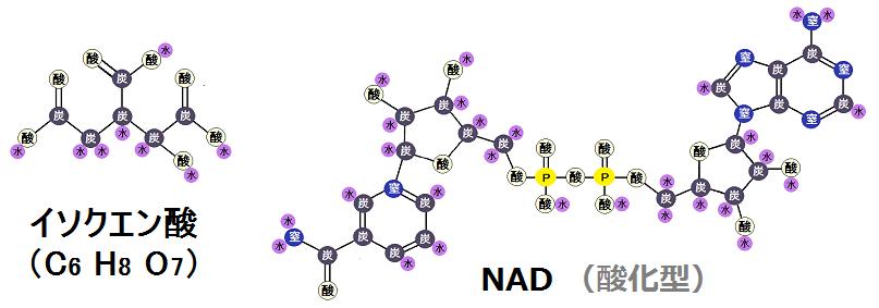 イソクエン酸と酸化型NAD