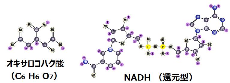 オキサロコハク酸とNADH