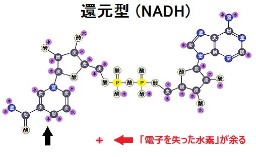 NADH+H+