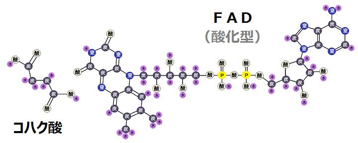 コハク酸と酸化型FAD