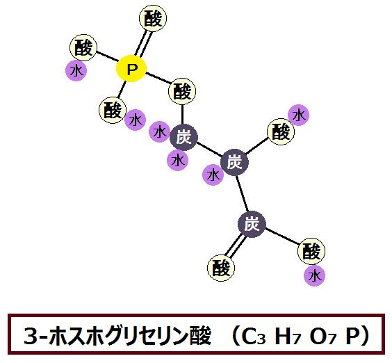 3-ホスホグリセリン酸