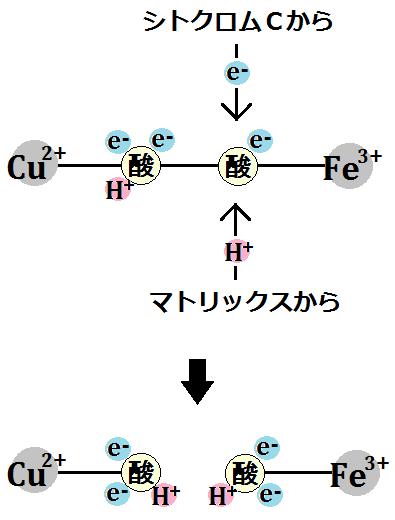 電子1つと水素イオン1つを取り込み、結合が切れる
