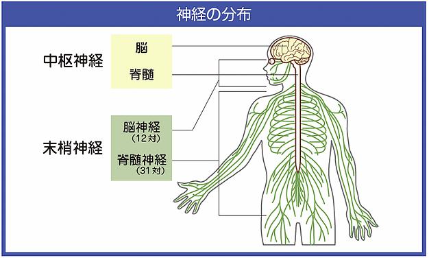 神経難病である多発性硬化症(MS)が半年でほぼ完治した治療法