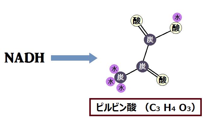 ピルビン酸とNADH