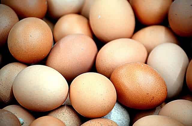 酸性食品の動物性タンパク質によって骨粗鬆症になる説の真相と、含硫アミノ酸のメリット